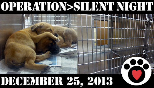 Operation Silent Night aimed to find an adoptive or foster home for every adoptable pet at the GBHS by Christmas Eve.